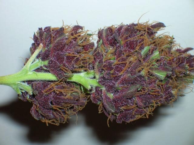 Grape Ape 4